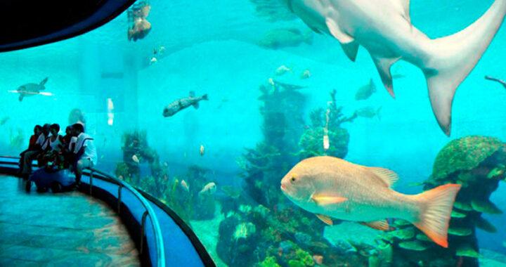 acuario-mazatlan